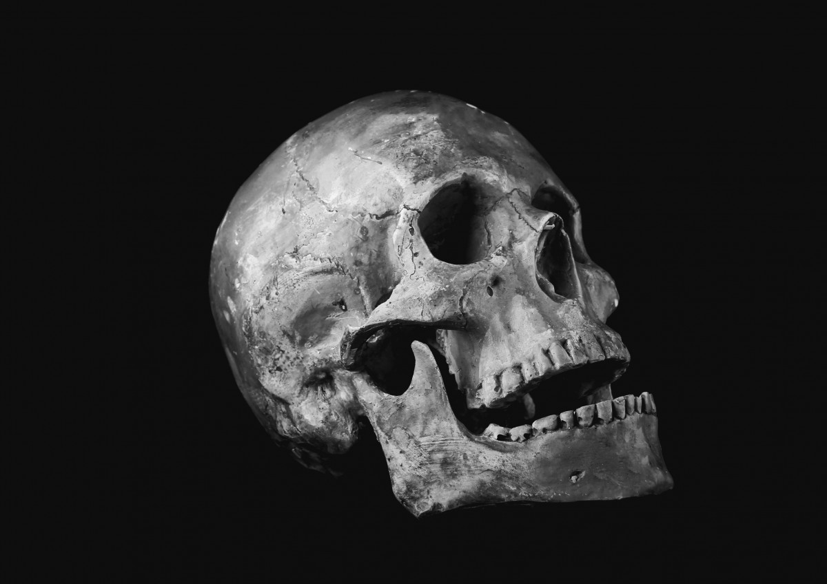 Wallpaper Seram 3d Free Images Black And White Darkness Skull Bone