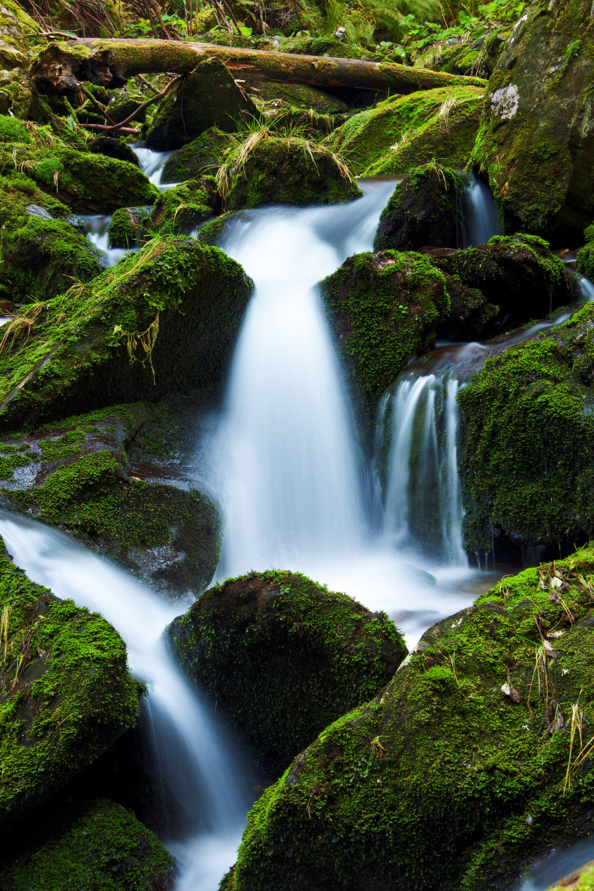 Animated Waterfalls Wallpapers Free Download Free Images Tree Forest Grass Moss Green Evergreen
