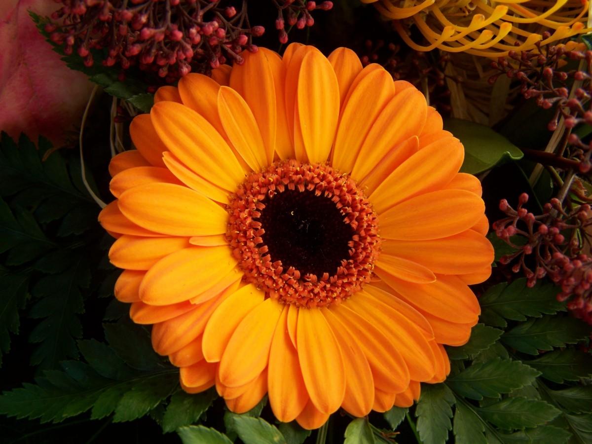 Kodak Black Wallpaper รูปภาพ ปลูก กลีบดอกไม้ สีเหลือง ดอกทานตะวัน ตัดดอก