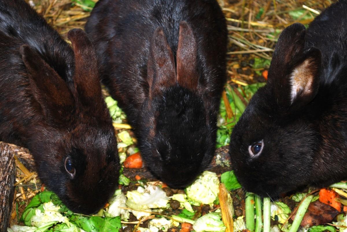 Spring Animal Wallpaper Free Images Nature Wildlife Mammal Baby Fauna Hare