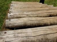 Free Images : tree, rock, floor, trunk, walkway, soil ...