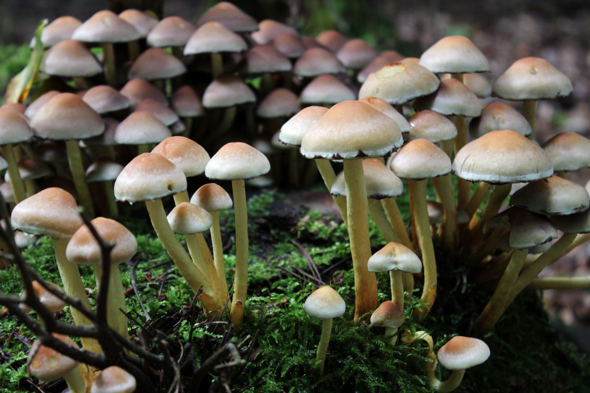 Psychedelic Wallpaper Hd Free Images Moss Autumn Forest Floor Fungus Toxic