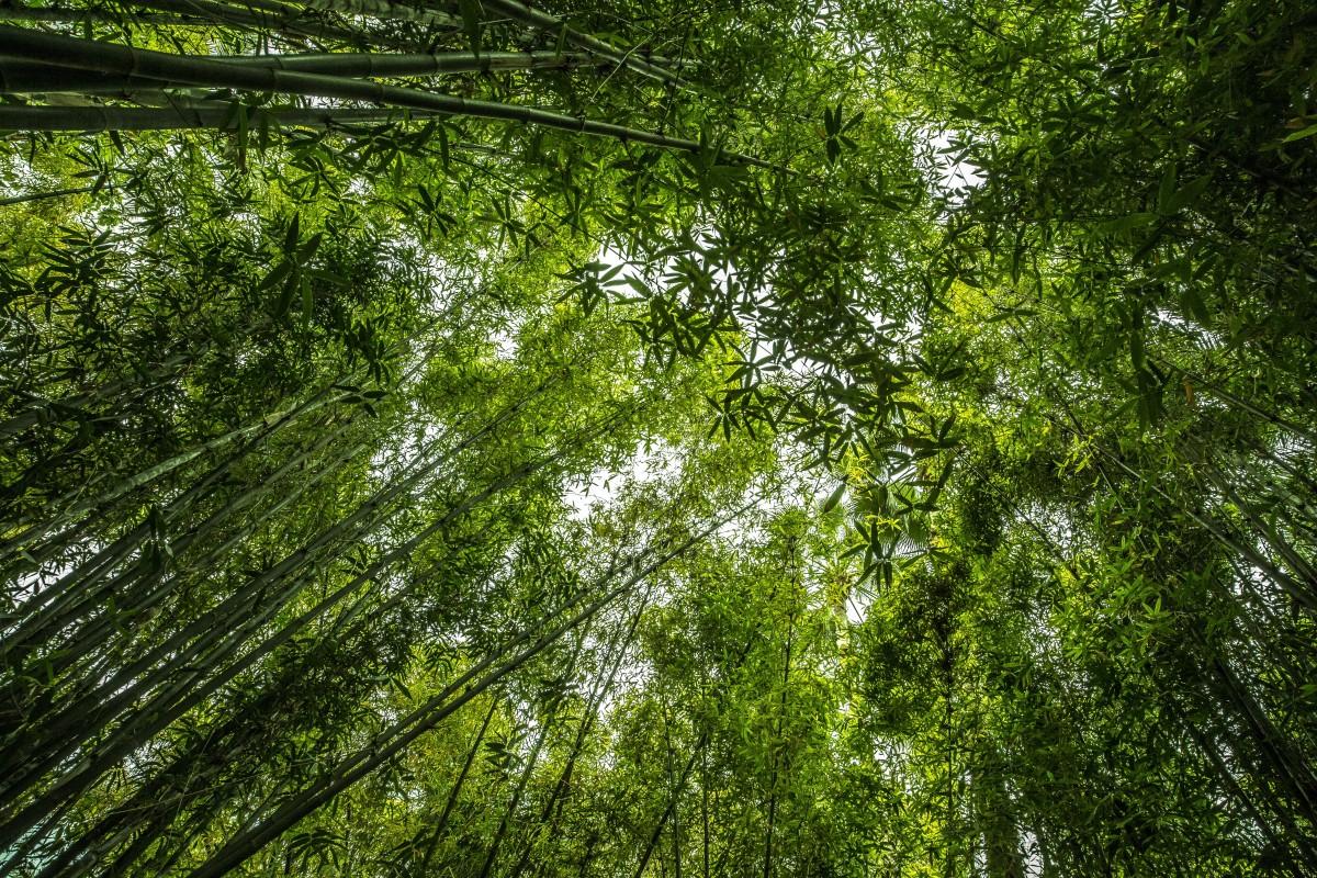 Free Wallpaper Fall Season Free Images Landscape Tree Nature Branch Sunlight