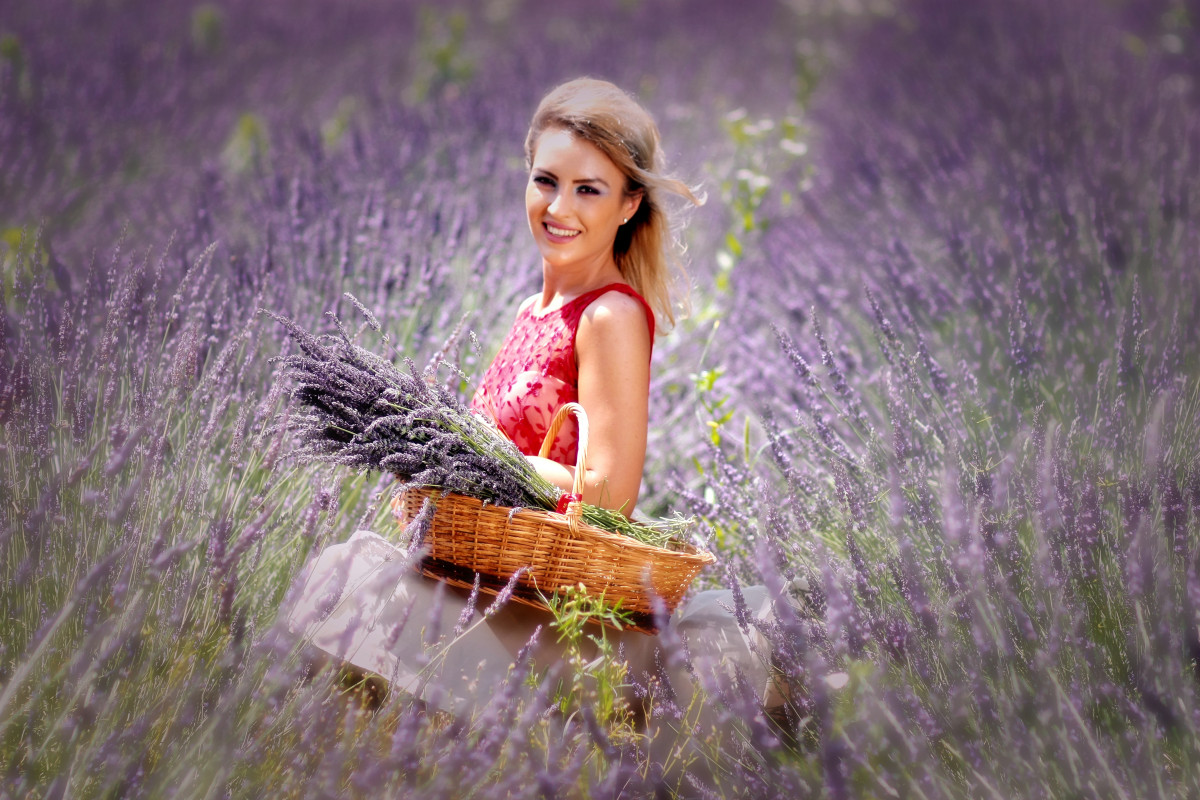 Hd Lavender Wallpaper Free Images Nature Plant Girl Field Lawn Meadow