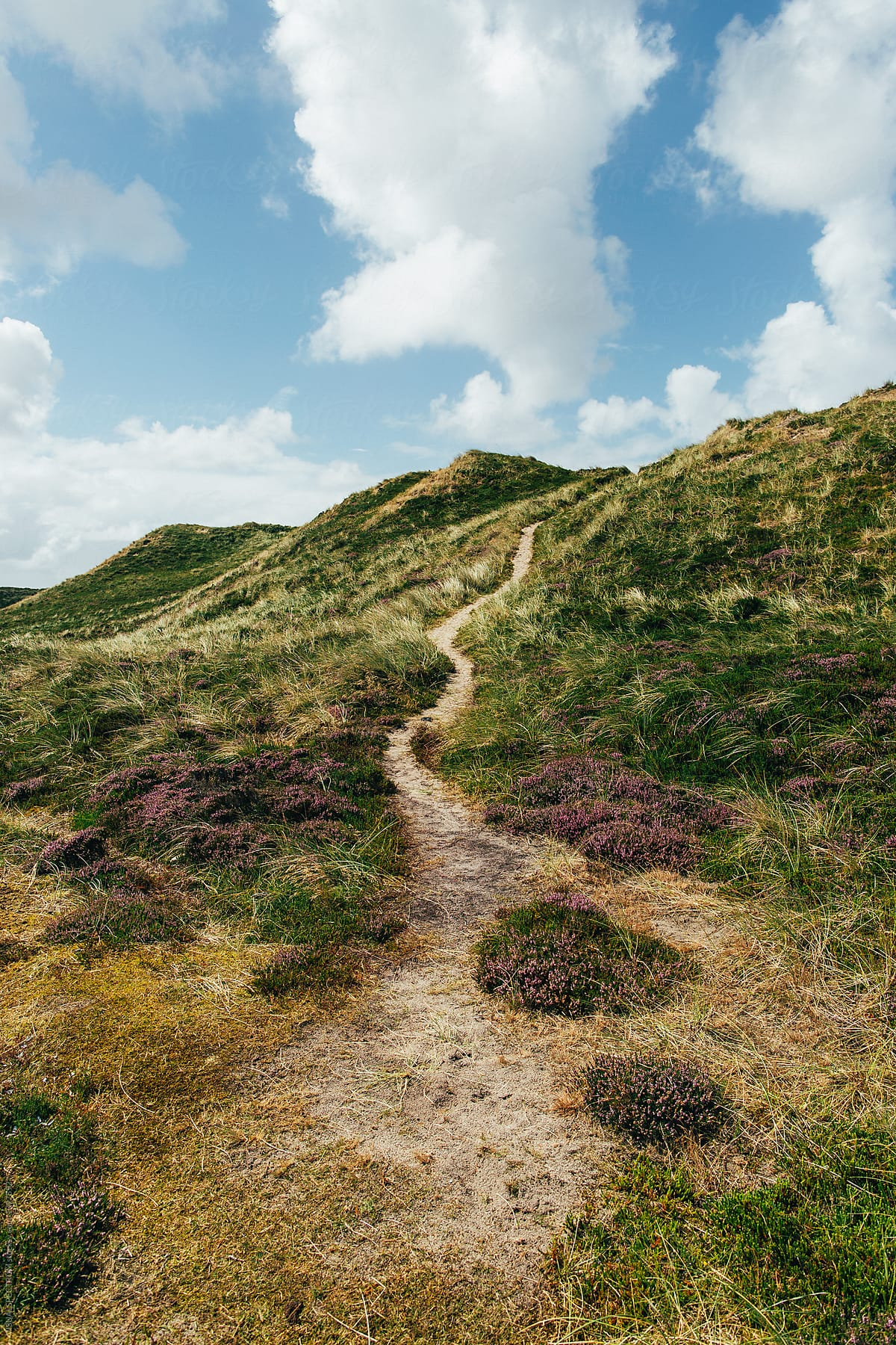 Sun Garden Sylt Stock Photo Path In Grassy Dune Landscape On Sylt Island Germany
