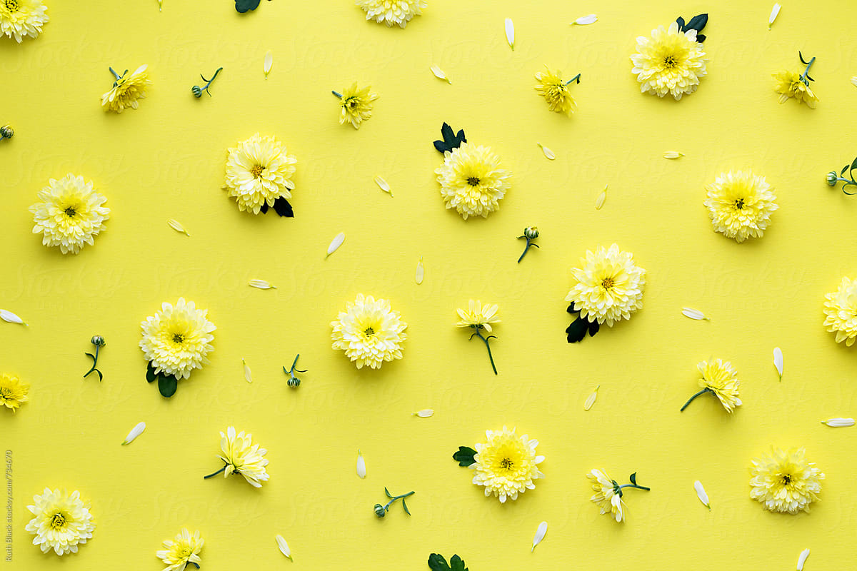 Fall Christmas Wallpaper Yellow Flower Background Stocksy United