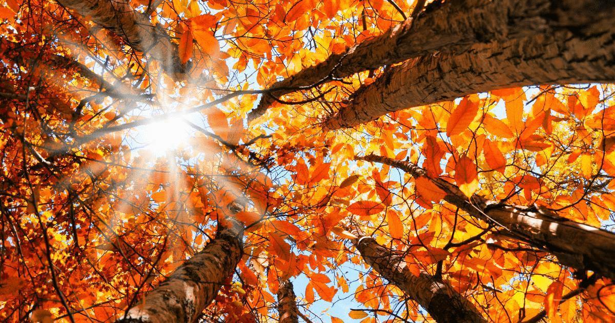 Add Calendar Google Calendar Meeting Supercharge Google Calendar 30 Tips Tricks Hacks And Fall Equinox – Autumnal Equinox