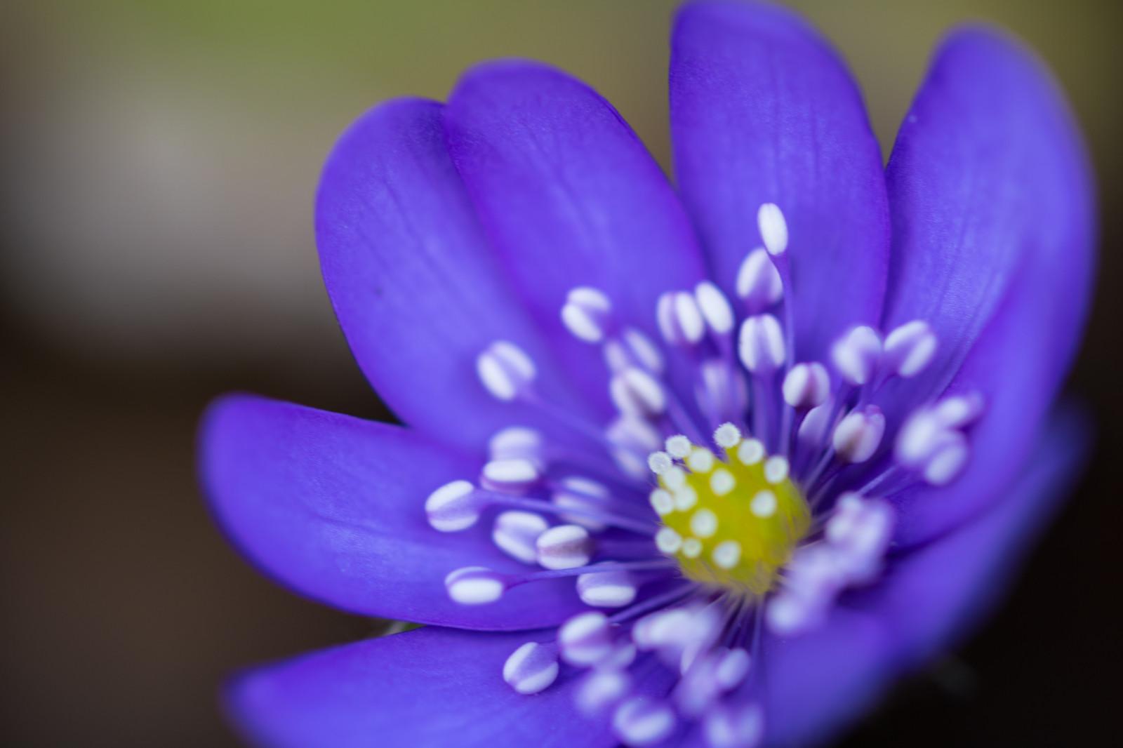 Violet Flower Hd Wallpaper Fond D 233 Cran La Photographie Violet Jaune Bleu Fleur
