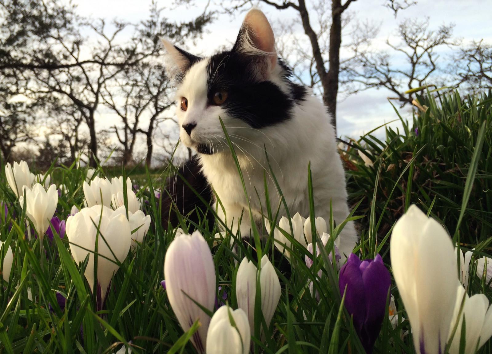 Cute Cat Wallpaper For Iphone Fond D 233 Cran Chat Herbe Parc Champ Violet Fleur