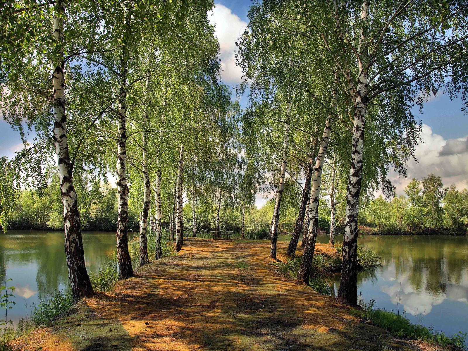 All Car Hd Wallpaper Download Wallpaper Summer Pond Park Birch Landscape 4032x3024