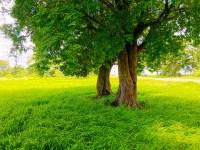 Wallpaper : sunlight, trees, forest, garden, nature, grass ...