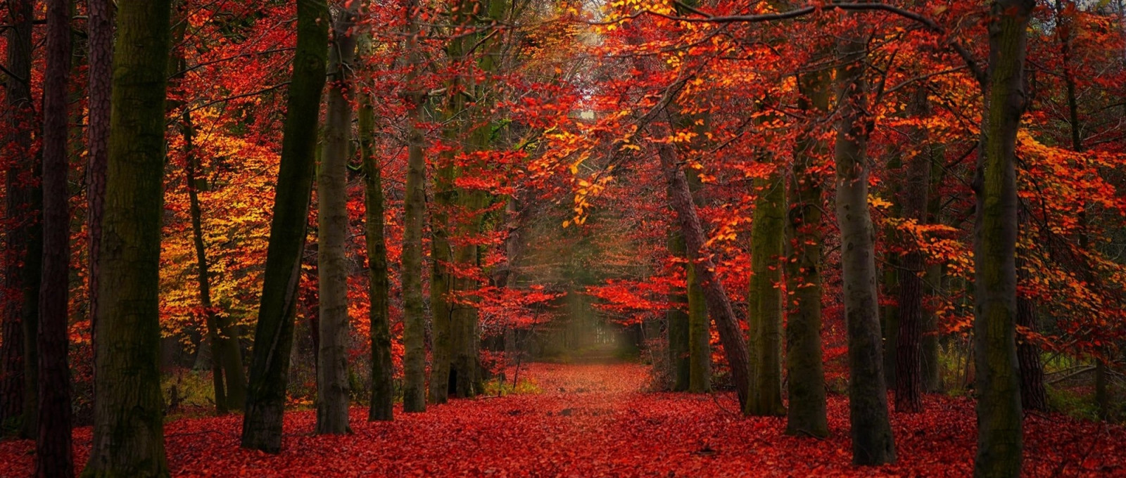 Fall Fairys Wallpapers Wallpaper Sunlight Trees Landscape Fall Leaves
