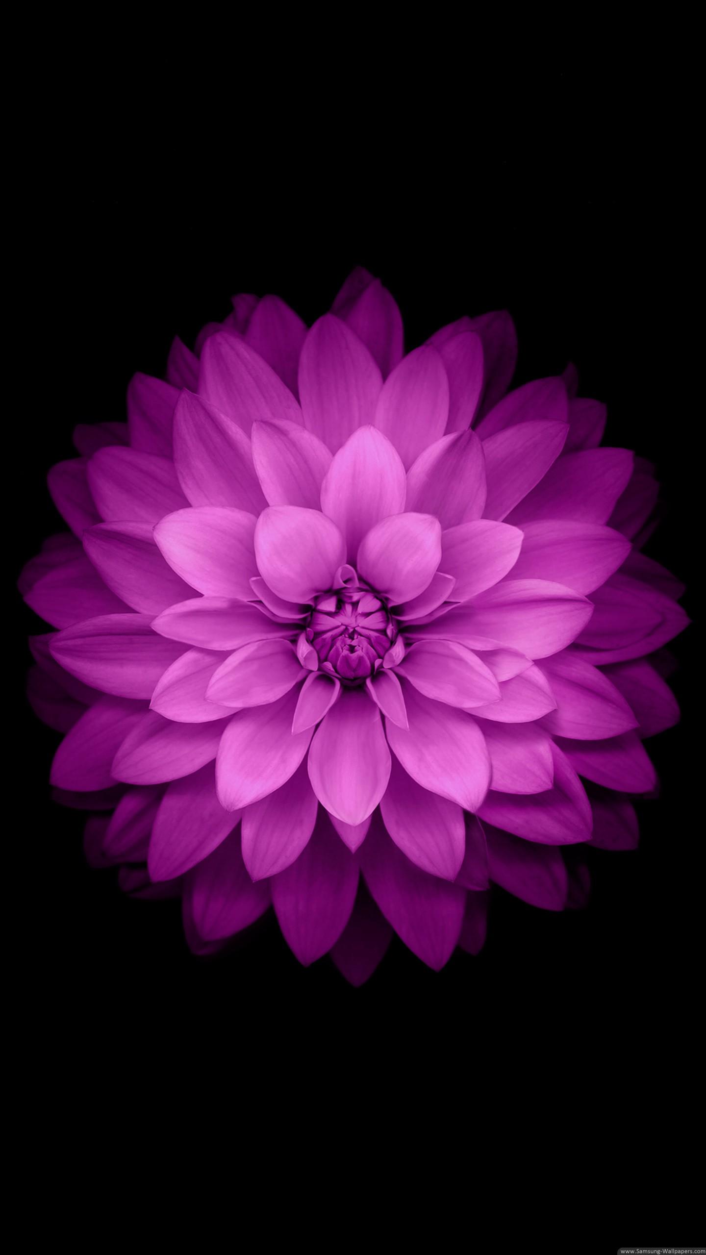 Wallpaper For Iphone 5s Black Fond D 233 Cran Fond Noir Violet Rose Fleur Mauve