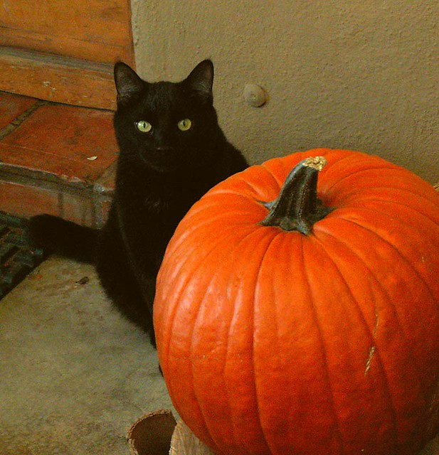 Wallpaper 3d Funny Black Cat Pumpkin Hard To Get A Photo Of A Black Cat So