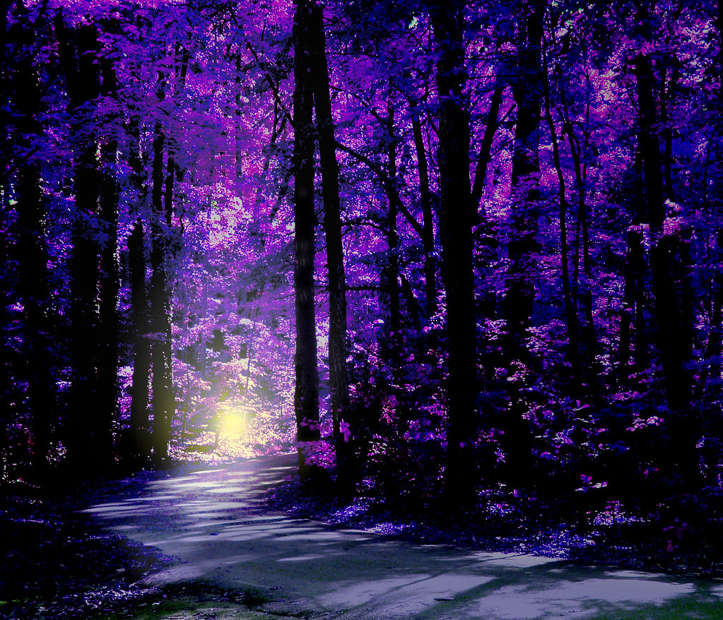 3d Colourful Wallpaper Magical Woods Visions Is My Blog About Flickr Cliff
