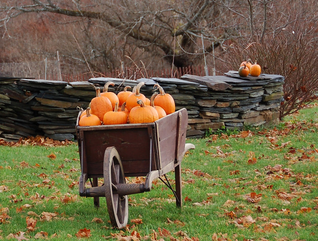 Thanksgiving 3d Wallpaper Fall Pumpkins A Load Of Pumpkins On The Northern Side Of