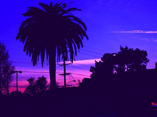 Free 3d Wallpaper Backgrounds Palm Tree Amp Sunset West Hollywood Palm Tree Against A
