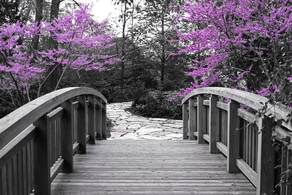 Birthday Wallpaper To Wife The Bridge To Spring - Part 2 | This Is A Selective Color
