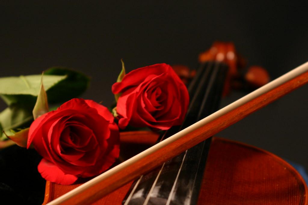 Still Life 3d Wallpaper Roses Amp Violin Still Life 2 Ana Liza Flickr
