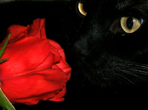 3d Emoticons Wallpapers Stop And Smell The Roses Inky Seems To Like The Smell