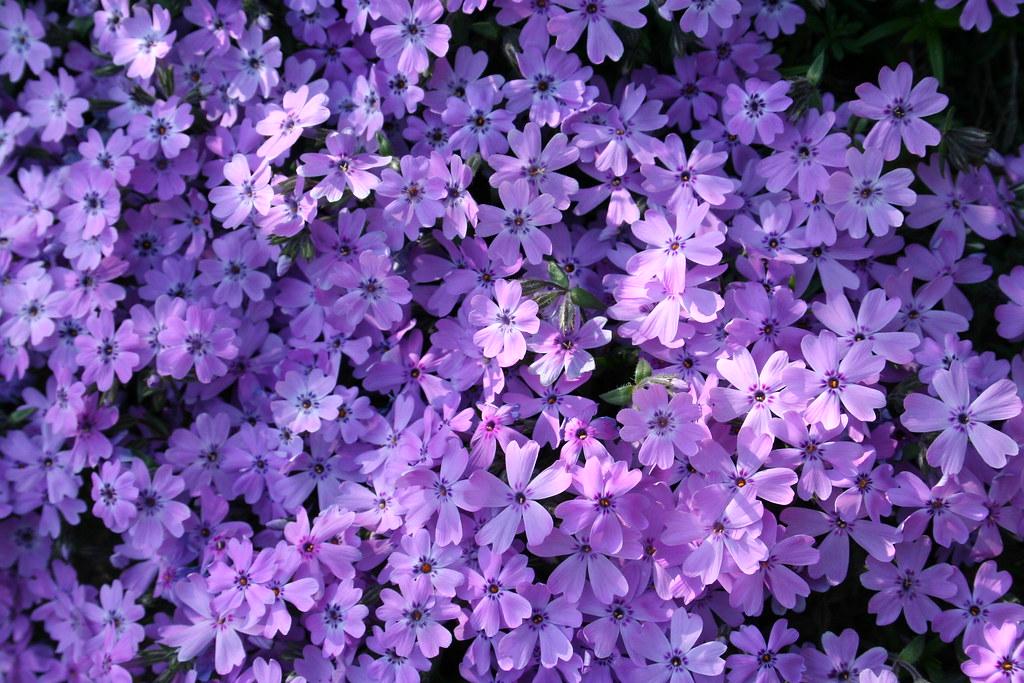 Wallpaper Purple 3d Cute Purple Flowers Lets Book Flickr