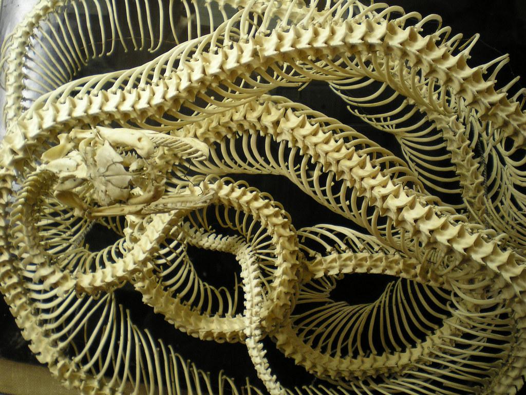 3d Moving Wallpaper Pictures Snake Skeleton Chris White Flickr