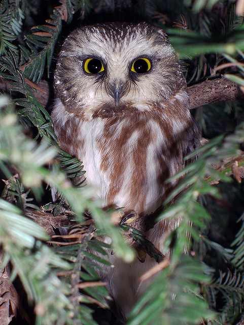 doug greenberg