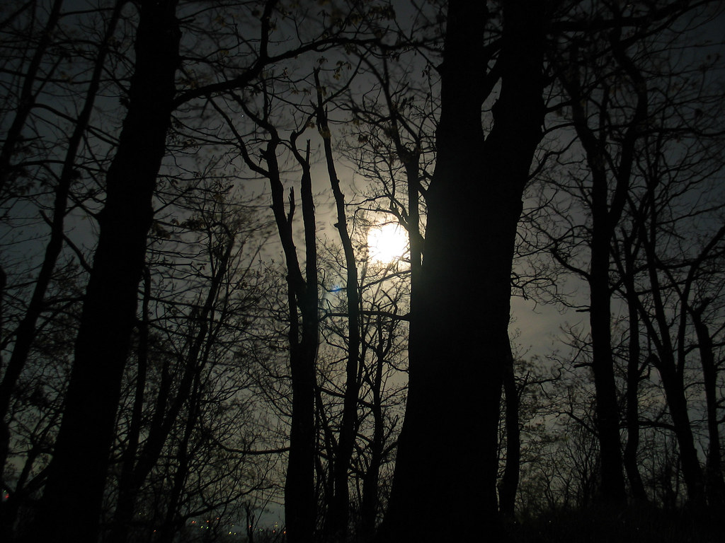 Dark Forest 3d Wallpaper Moon Through Trees On A Mountain Top Shenandoah County