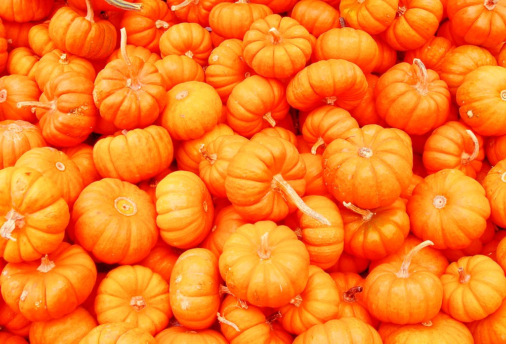 Fall Pumpkin Iphone Wallpaper Mini Pumpkins Taken Last October While Out Looking For A
