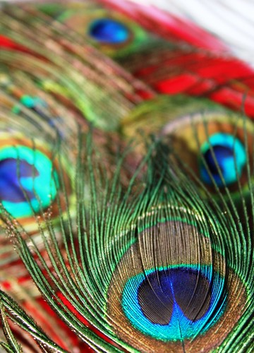 Vertical Wallpaper Hd Peacock Feathers I Wanted These Peacock Feathers In