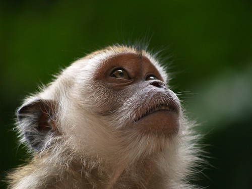3d Wallpaper Cave Cynomolgus Monkey This Is My All Time Favourite Photo I