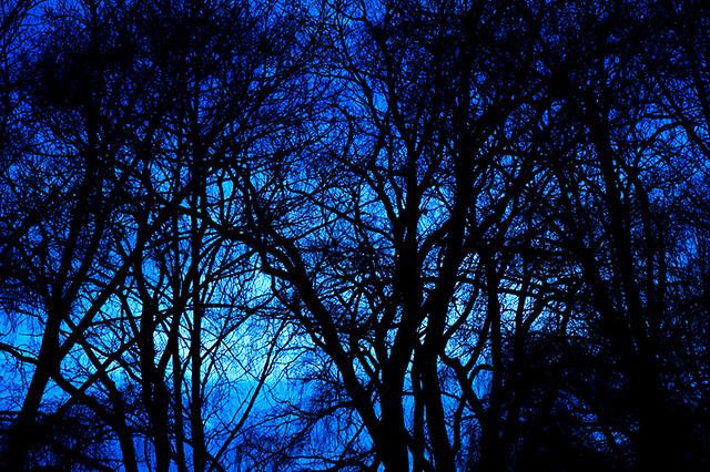 Hd 3d Wallpaper For Desktop Background Blue Woods From The Jack Darling Park Session Last Week