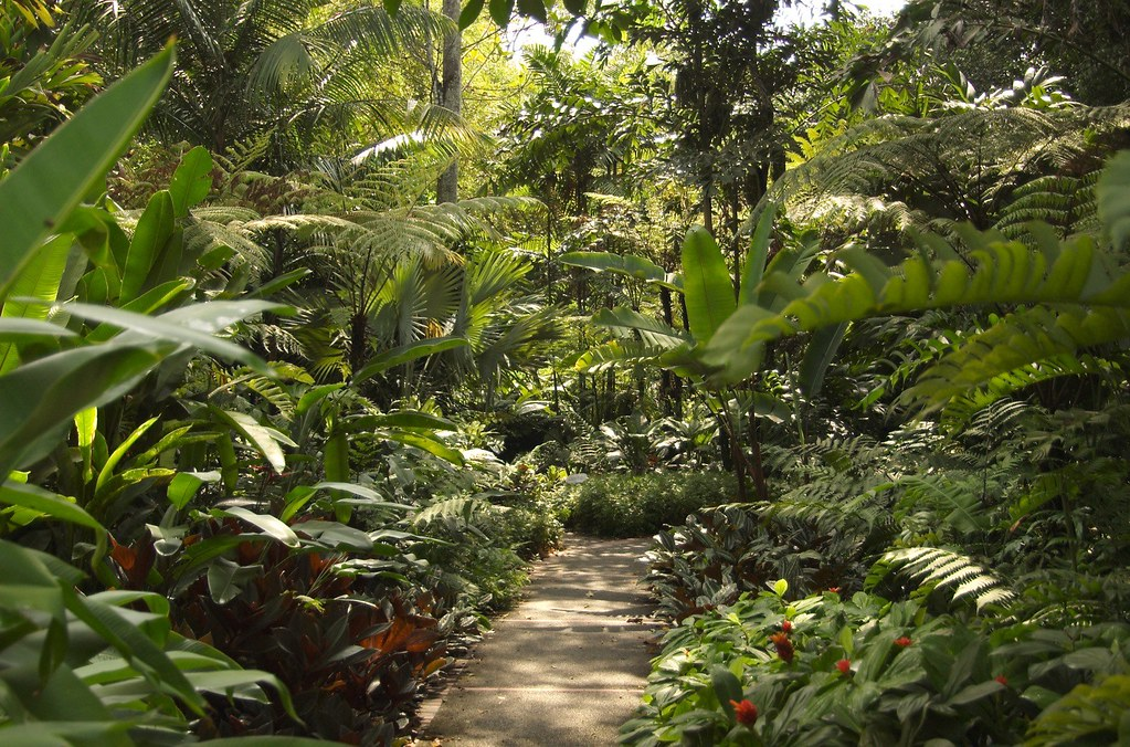 Free 3d Wallpaper Backgrounds Zoo Landscaping Tropical Landscaping At The Singapore