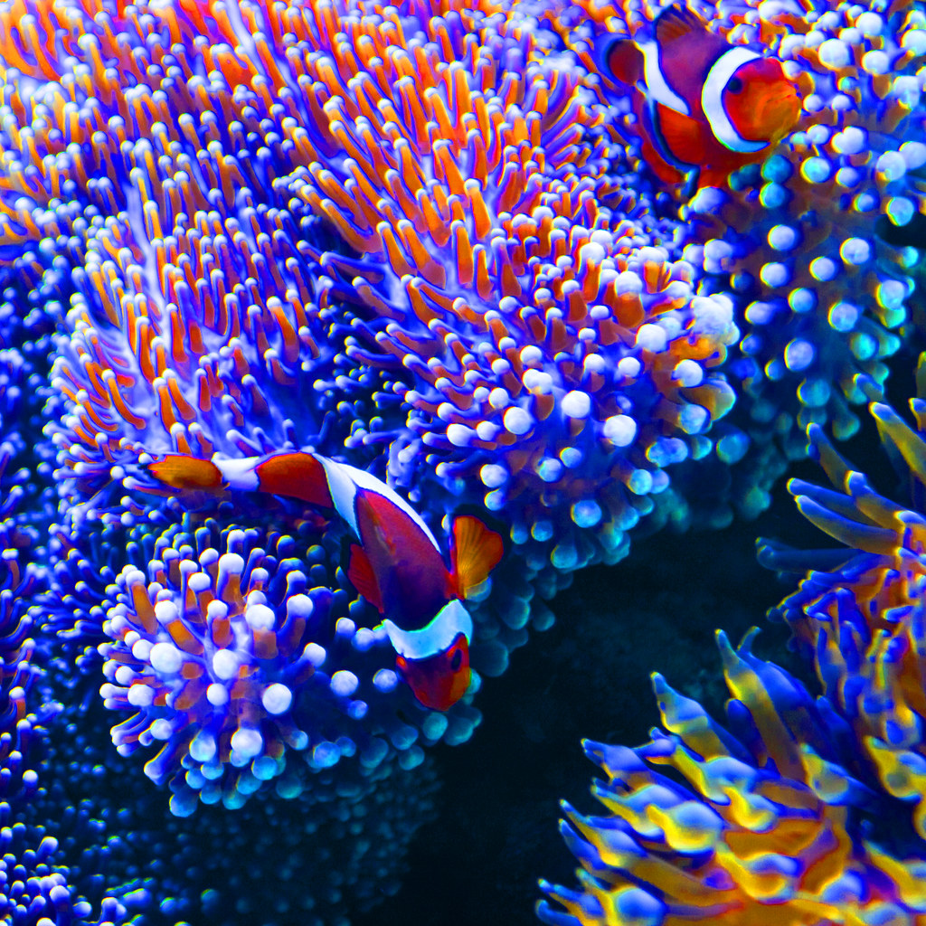 Aquarium 3d Live Wallpaper Pro Hawaii 5 Clown Fish And A Story I Am Now Going To