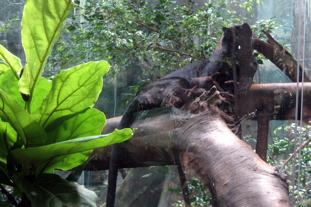 Jaguar Animal Wallpaper Nyc Bronx Bronx Zoo Jungle World Black Panther Flickr