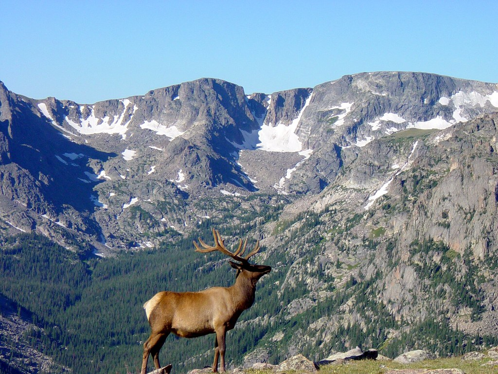 3d Wallpaper Of Deer Rocky Mountain Wapiti I No Tricks Here We Actually Came