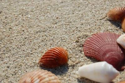 Sea Shells 4 | Jumeirah, Dubai | Leonardo Aguiar | Flickr