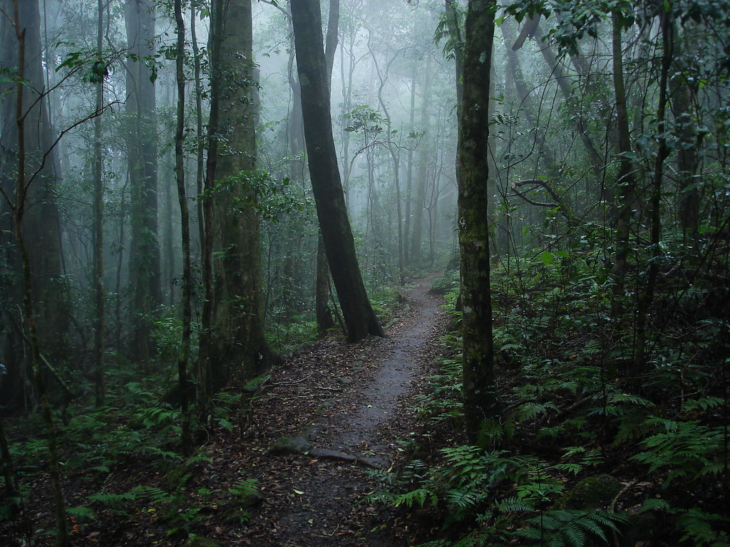 Cute Rainy Weather Wallpapers Misty Forest After The Rain Lamington National Park Flickr