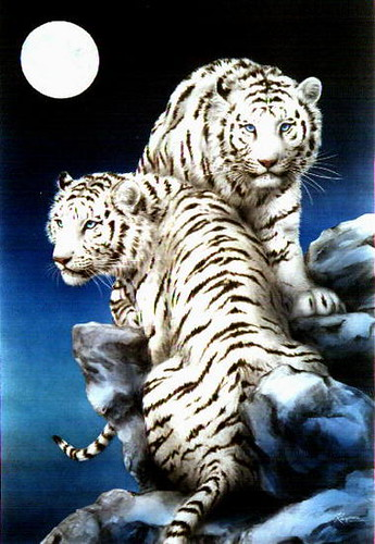 Wallpapers 3d Movimiento Para Windows 7 White Tiger Moon This Is A Beautiful Painting Debbie
