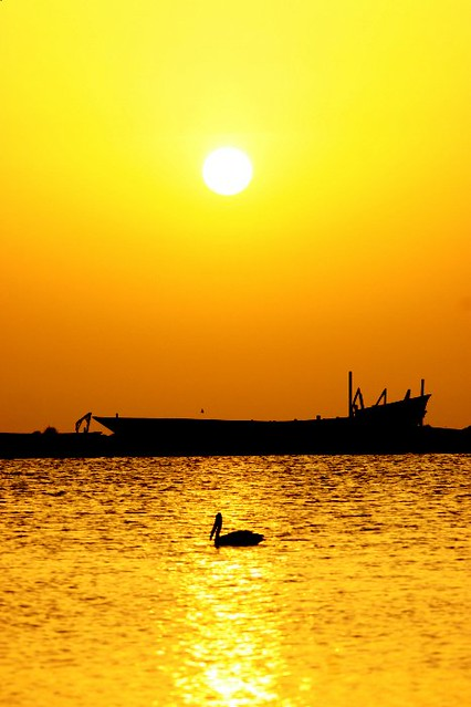 Sea Sunset Wallpaper Hd Pelican And Dhow At Sunset Tihama Yemen Sunset On