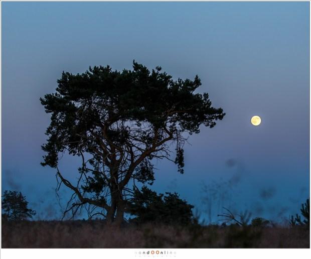 Volle Maan in de avondschemering. Supermaan of niet? (100mm brandpunt; ISO400; f/8; t=1/40sec)
