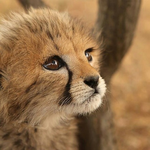 3d Nature Wallpaper Photos Is This The Cutest Little Cub You Ve Ever Seen Frontierv