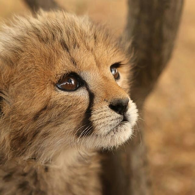 Cute Map Wallpaper Is This The Cutest Little Cub You Ve Ever Seen Frontierv