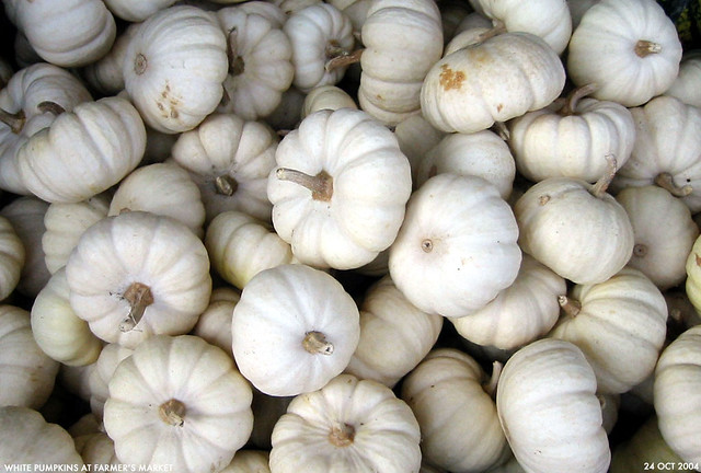 Free 3d Wallpaper Backgrounds White Pumpkins White Pumpkins In A Bin At The Finley
