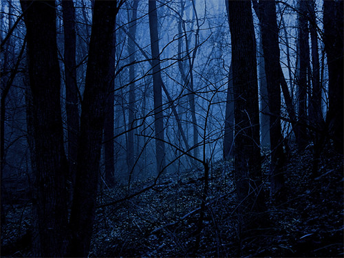 3d Ghost Wallpapers Free Forest By Moonlight I Had To Work With This One Quite A