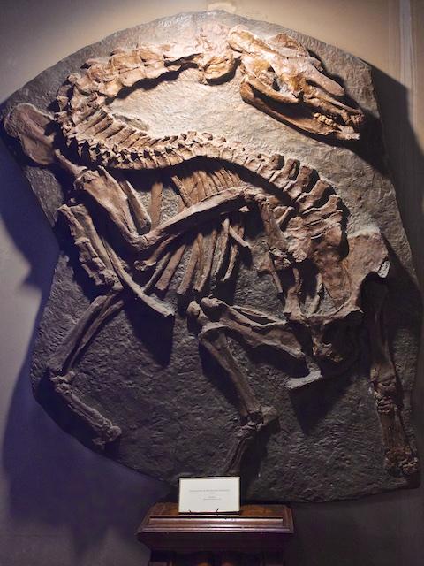 Palaeotherium de Mormoiron