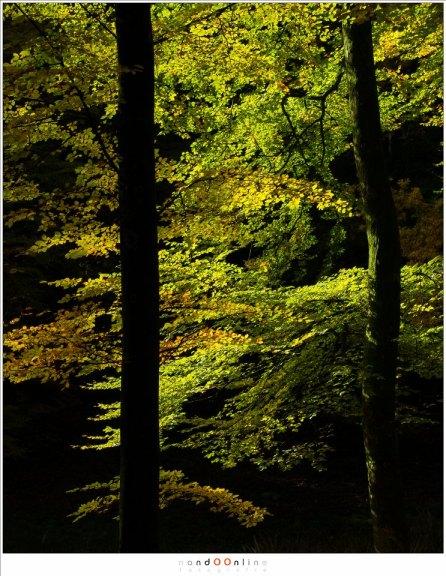 De bomen in silhouet want niets mag afleiden van de schitterende bladeren waar het zonlicht doorheen schijnt. (ISO200, f/5, -0,6EV, 1/400, 88mm brandpunt)