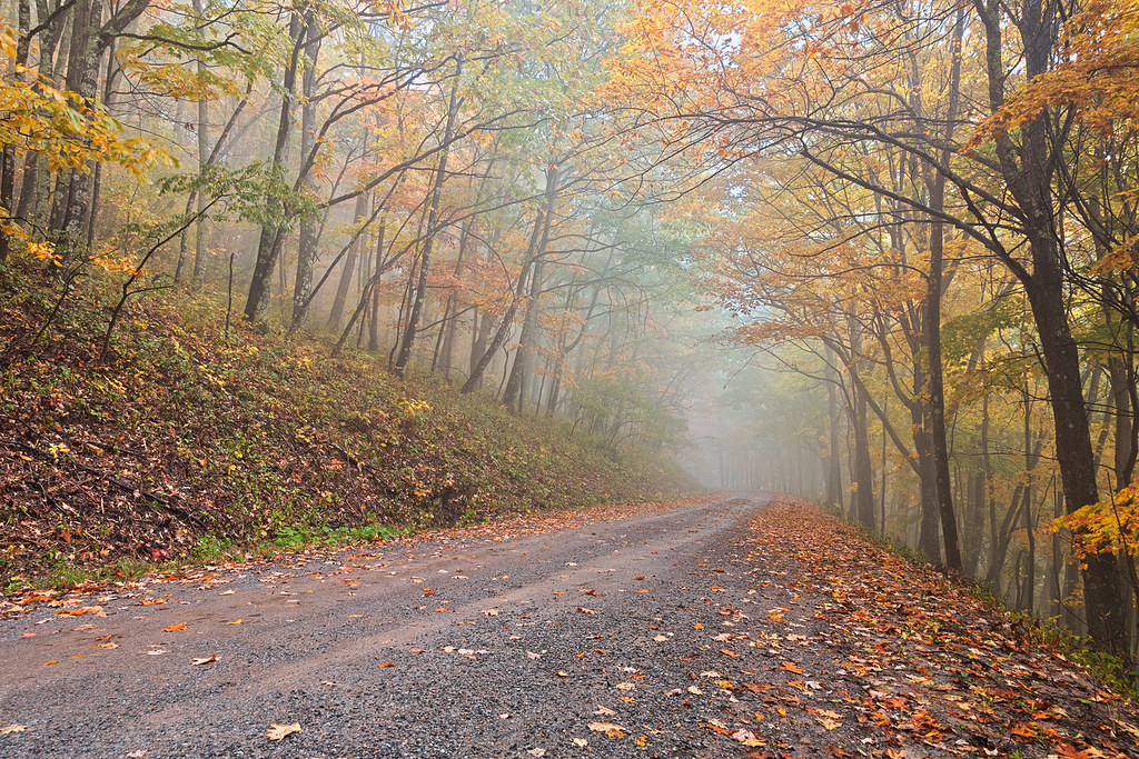 Free Fall Flowers Wallpaper Misty Autumn Forest Road Hdr Misty Autumn Forest Road