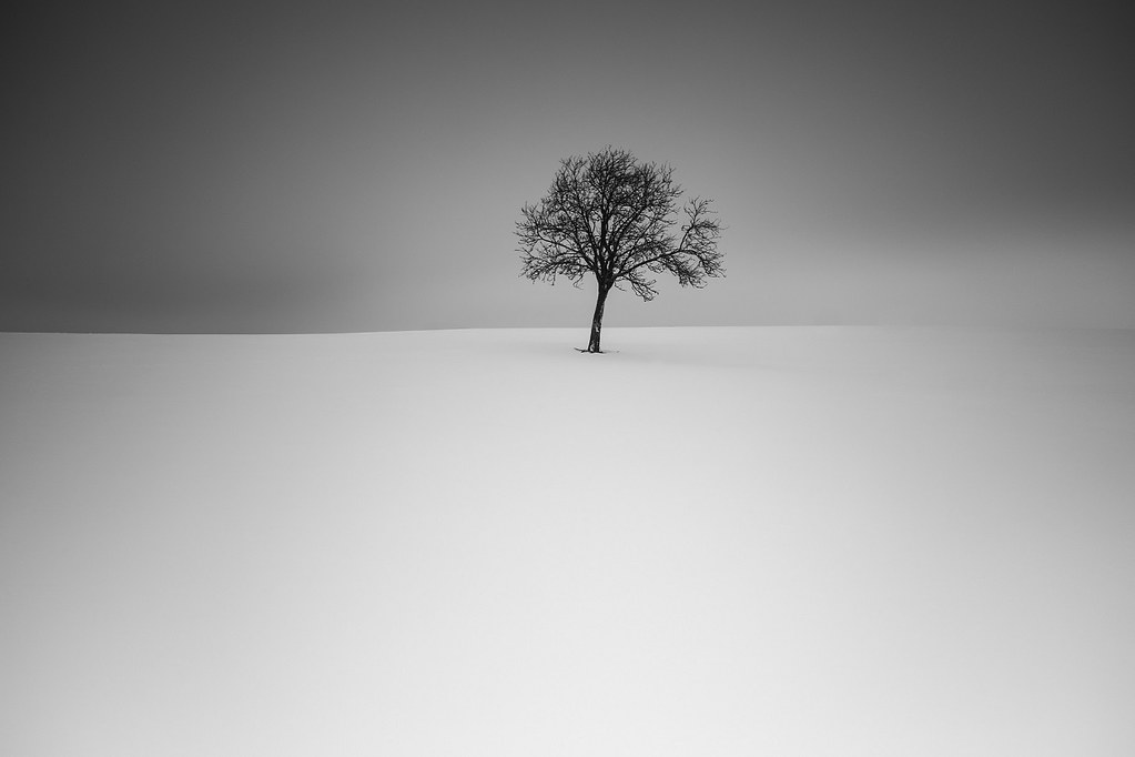 Www 3d Wallpaper Free Download Loner Shot During One Of Those Numerous Snowstorms In