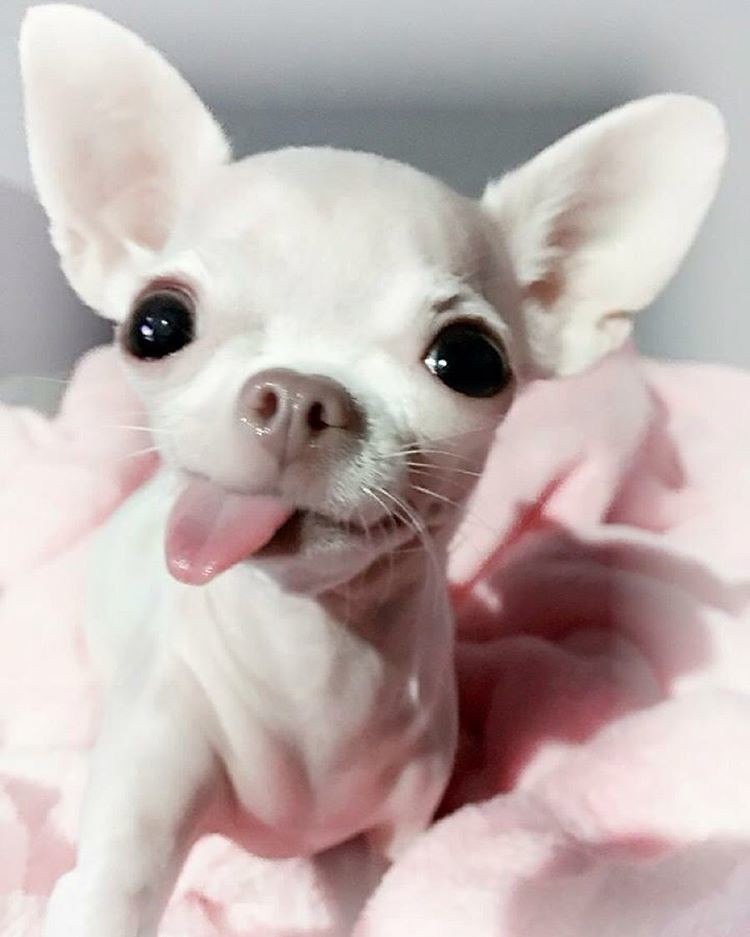 Www Cute Puppies Wallpaper Com Quot Good Morning Y All Happy Thursday From Little Me Tiny P